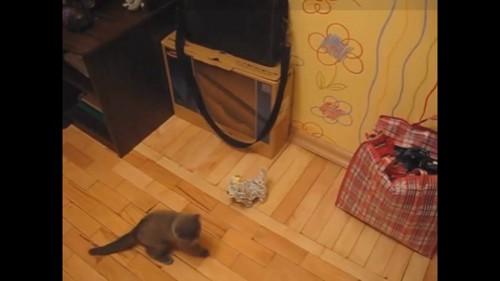 オモチャの子猫