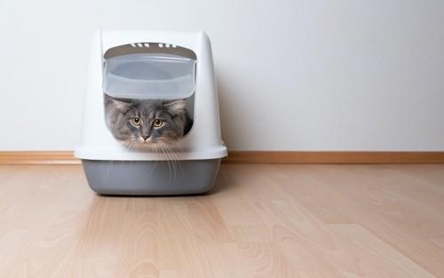 屋根付きの猫用トイレに入っている猫