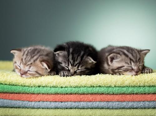 タオルの上で寝る子猫3匹