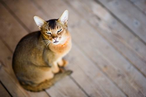 じっとこちらを見上げて観察する猫