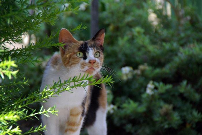森を歩く三毛猫