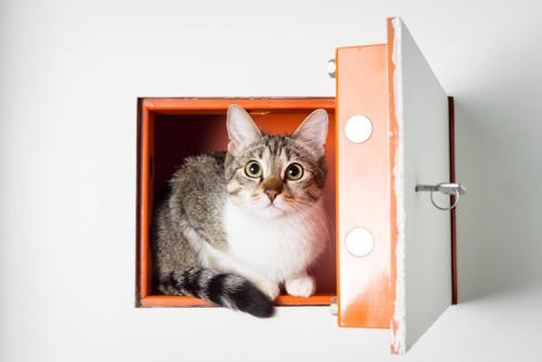 ロッカーにいる猫