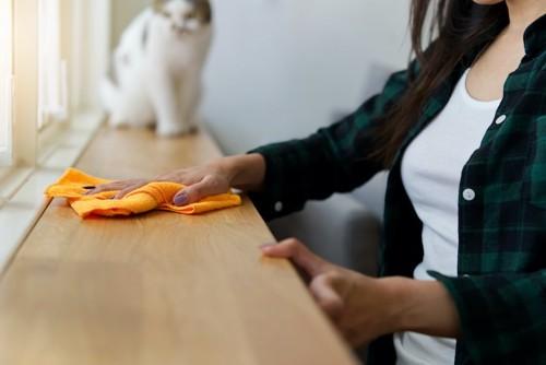 拭き掃除をする飼い主と座る猫