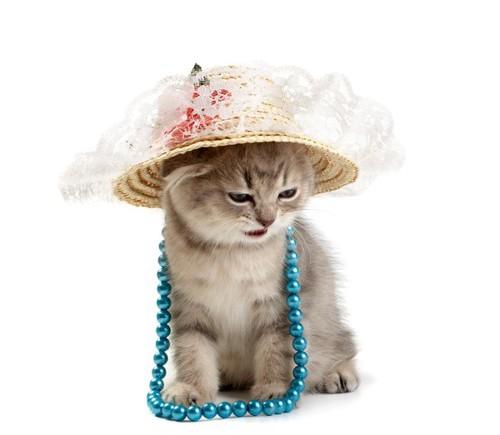 帽子をかぶった子猫