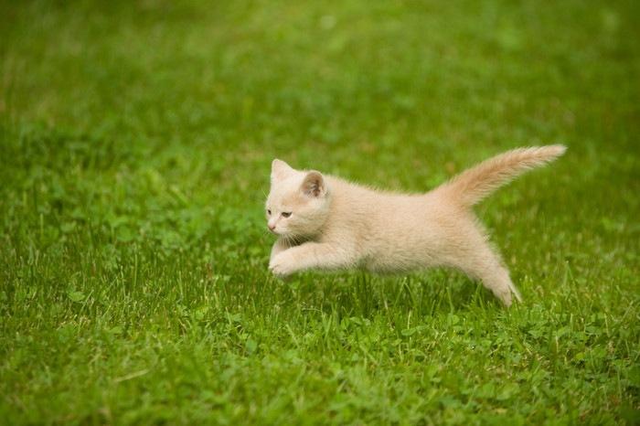 原っぱでジャンプする猫