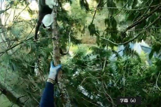 木の上に向かって登っていくアイラ