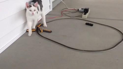 誇らしげな猫
