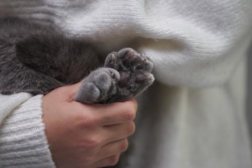 両手をつかまれる猫