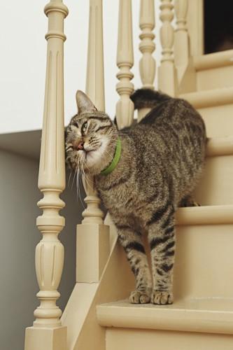 手すりにすり寄る猫