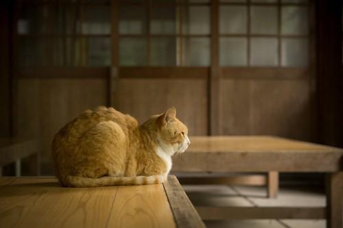 背中丸めてる猫