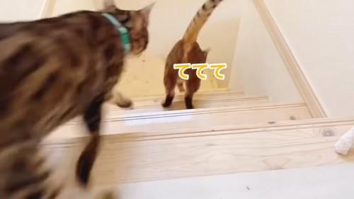 階段を下る猫の後ろ姿