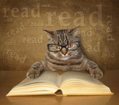 英字本を読む猫