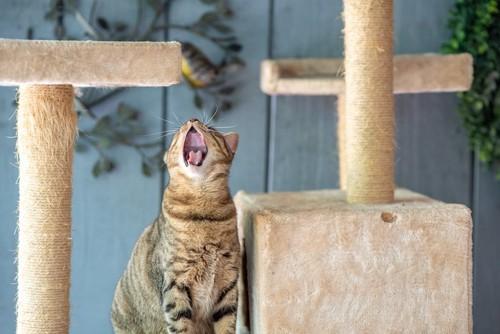 キャットタワーの上であくびをする猫