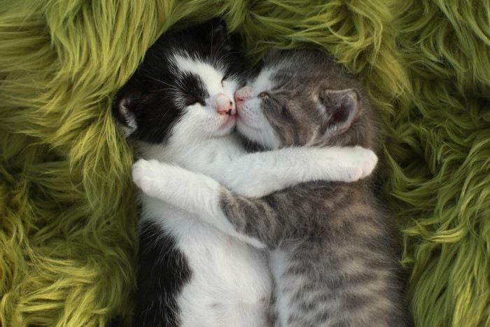 眠る赤ちゃん子猫2匹