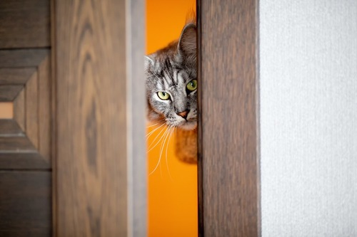 少し開いた扉から覗く猫