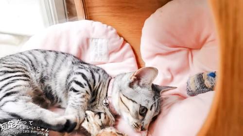 寝ながら遊ぶ子猫