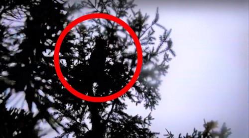 木の上で動き出す猫