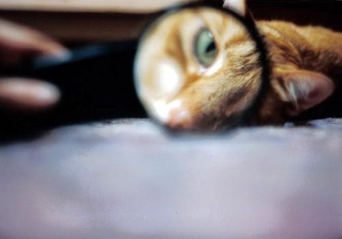 虫メガネと猫