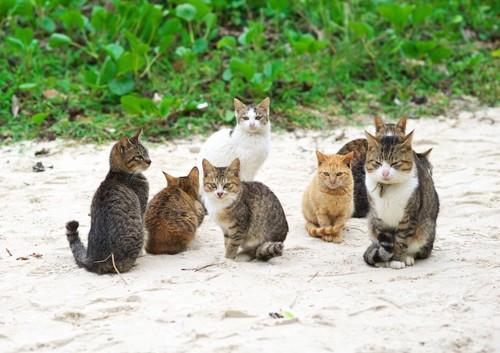 砂浜に集合している猫たち