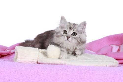 湯たんぽに乗る猫