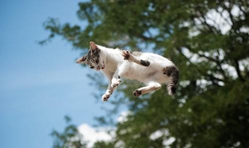 空中でジャンプ中の猫