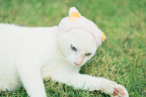 猫耳をかぶる猫