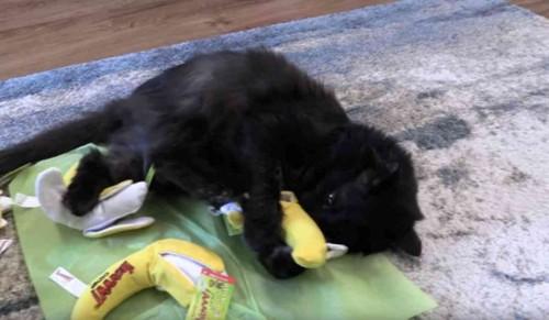 おもちゃを蹴る黒猫