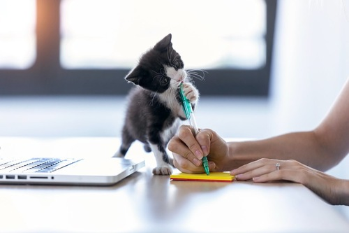 メモを取る飼い主の邪魔をする子猫