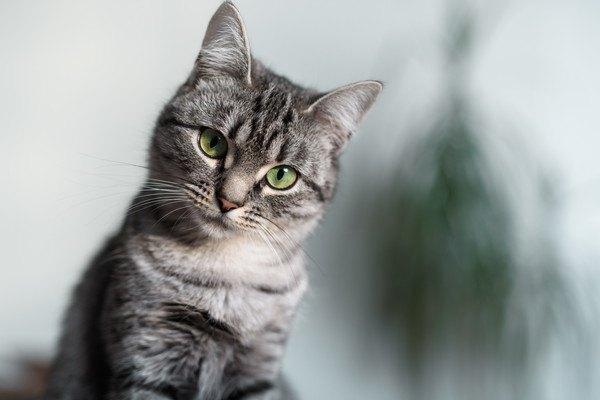 背景が暗いキジ猫