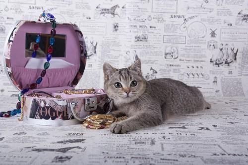 ジュエリーと猫