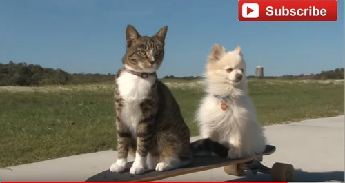 スケボーに乗る犬と猫