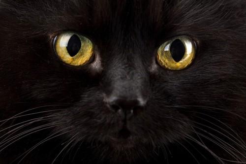 黄色い瞳の黒猫