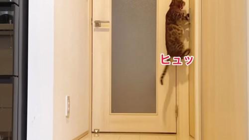 ドアノブにジャンプする猫