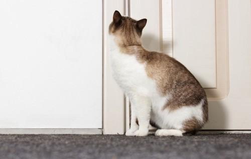 ドアを見つめる猫