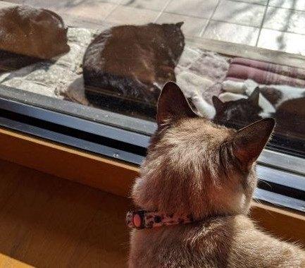 こしゃむと外猫
