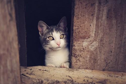 屋根裏の猫