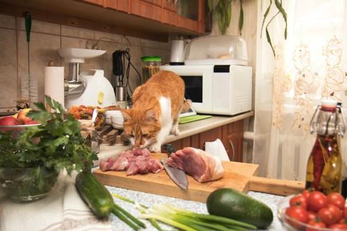 台所に乗ってお肉に顔を近づける猫