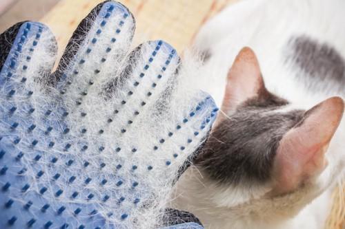 手袋型のブラシについた大量の抜け毛と猫の後ろ姿