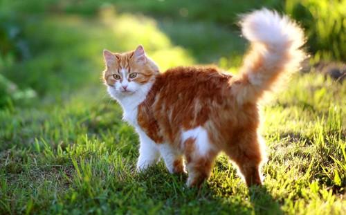 野原で遊ぶ猫