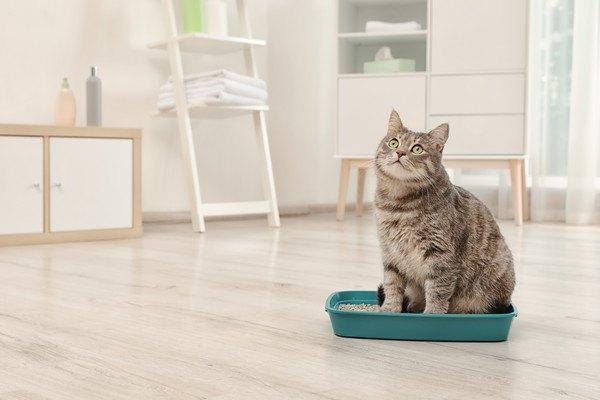 部屋にいる猫とトイレ