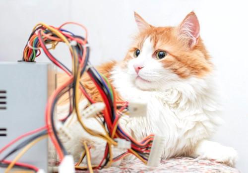 ケーブルと猫