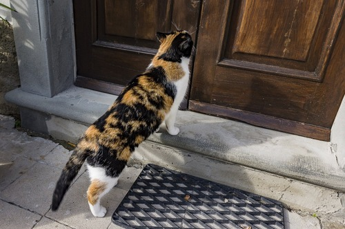 玄関に戻ってきた猫