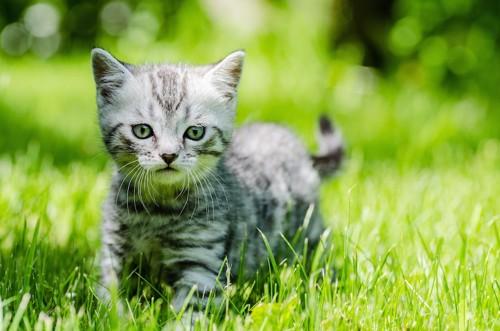 草原の中にいる子猫