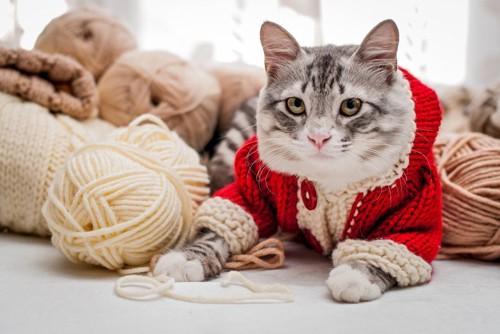 洋服を着る猫