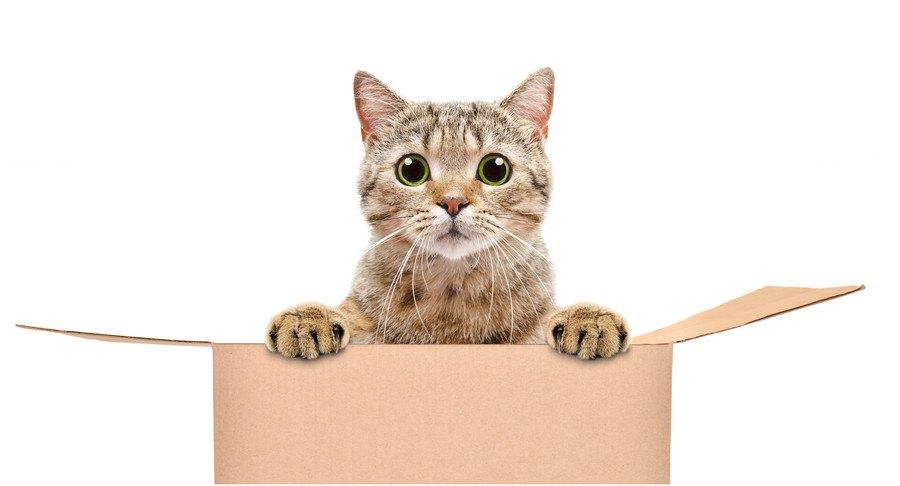 段ボールの猫
