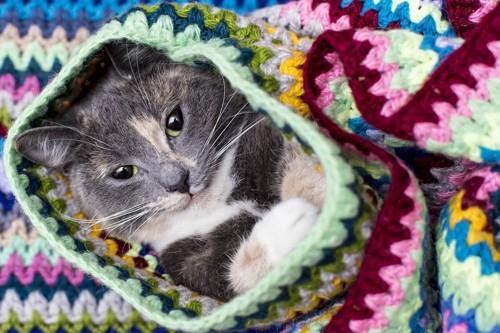 セーターに潜る猫