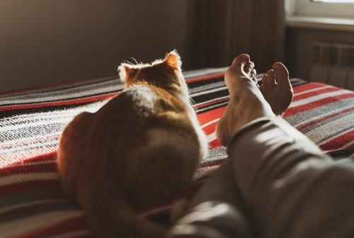 向こう向きの猫と足
