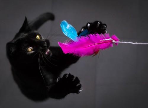 ジャンプしておもちゃを捕まえる猫