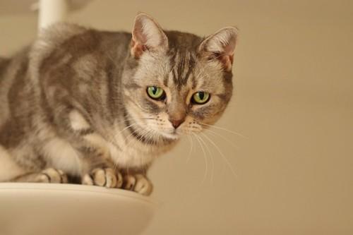 キャットタワーの上で悲しげな顔をする猫