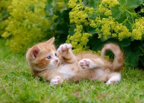 活発な子猫